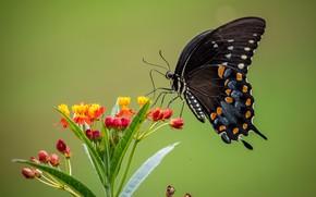 Картинка макро, цветы, фон, бабочкa