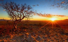 Картинка закат, дерево, Африка, Намибия