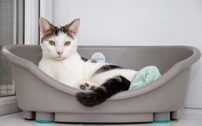 Картинка кошка, белый, кот, взгляд, морда, уют, дом, фон, стена, светлый, окно, хвост, ванна, белая, серая, …