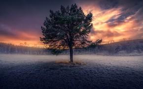 Картинка иней, поле, осень, небо, трава, облака, закат, дерево, поздняя осень