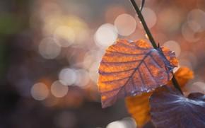 Картинка осень, свет, ветка, боке, осенние листья