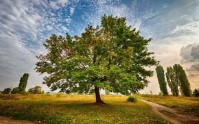 Картинка дорога, небо, облака, фото, дерево