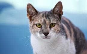 Картинка кошка, морда, зеленые глаза