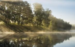 Картинка лучи, деревья, река, утро