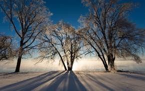 Картинка зима, снег, деревья, туман, утро, мороз, трио