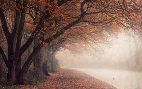 Картинка England, North Warwickshire District, autumn colours, Polesworth, canal path