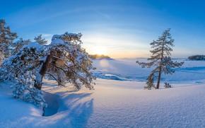 Картинка зима, снег, деревья, рассвет, утро, сугробы, Финляндия, Finland, Котка-Хамина, Kotka-Hamina
