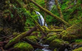 Картинка лес, деревья, водопад, мох, чаща