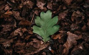 Картинка осень, листья, листок, зелёный, сухие листья