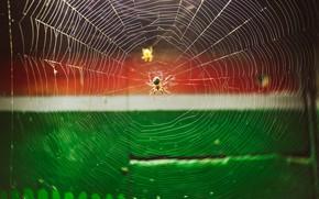 Картинка природа, паутина, паук