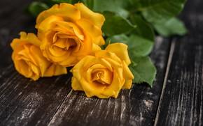 Картинка цветы, букет, желтые розы