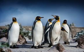 Картинка небо, облака, птицы, растительность, стая, пингвины
