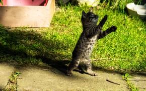 Картинка кошка, трава, котенок, поляна, игра, малыш, котёнок, ящик, стойка