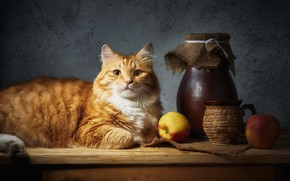 Картинка кошка, кот, взгляд, морда, свет, поза, уют, темный фон, стол, стена, яблоки, еда, рыжий, кружка, …