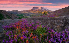 Картинка Sunrise, Wild Flowers, Indian Paint Brush