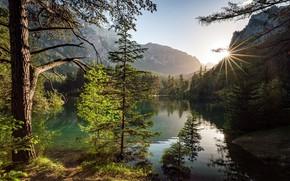 Картинка деревья, горы, озеро, Австрия, Austria, Alps, Штирия, Green Lake, Grüner See, Styria, Зелёное озеро, Трагёс, …