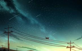 Картинка кошка, лэп, падающие звезды