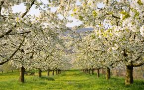 Картинка зелень, трава, деревья, пейзаж, цветы, ветки, природа, газон, стволы, поляна, красота, весна, сад, луг, аллея, ...