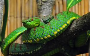 Картинка змея, ветка, террариум