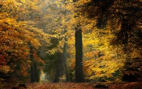 Картинка осень, лес, деревья, Нидерланды
