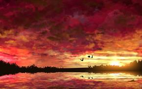 Картинка вода, солнце, деревья, закат, птицы