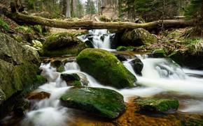 Картинка лес, камни, мох, Германия, речка, Ильзенбург