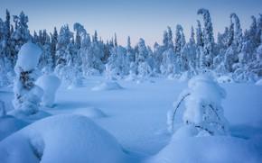 Картинка зима, лес, снег, деревья, сугробы, Россия, Карелия, Национальный парк Паанаярви, Андрей Баскевич
