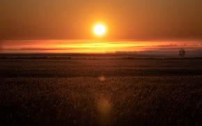 Картинка поле, небо, трава, солнце, облака, свет, закат, туман, луг, яркое, закатное