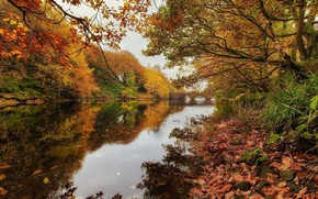 Картинка красота, природа, дуб, река, осень, пейзаж