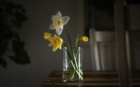 Картинка цветы, стол, нарциссы жёлтые