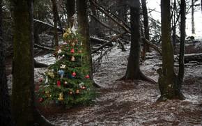 Картинка лес, праздник, ёлка