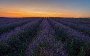 Картинка цветы, плантация, много, Франция, природа, Прованс, лавандовое поле, лаванда, сиреневые, вечер, сумерки, поле, лето, небо, …