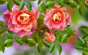 Картинка Kwiaty, Róże, Listki
