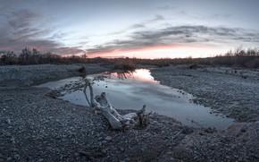 Картинка поле, река, дерево