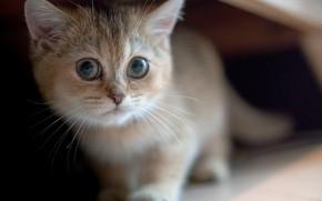 Картинка котенок, размытость, мордочка