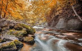 Картинка осень, лес, ручей