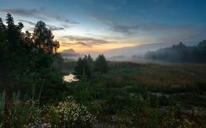 Картинка деревья, пейзаж, природа, туман, вечер, луг, травы, Сергей Сергеев