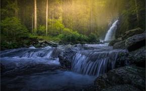 Картинка лес, свет, река, камни, берег, водопад, поток, сосны, водоем