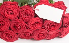Картинка цветы, розы, букет, красные, red, бутоны, flowers, romantic, roses