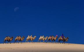 Картинка небо, Луна, верблюд, Китай, караван, Внутренняя Монголия