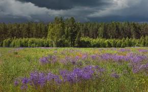 Картинка поле, лес, лето, цветы, тучи, луг, грозовые, хмурое небо