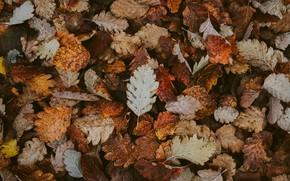 Картинка осень, листья, листва, сухие, опавшие