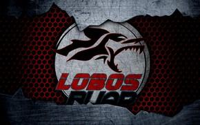Картинка wallpaper, sport, logo, football, Lobos BUAP