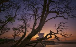Картинка облака, ветки, дерево, зарево