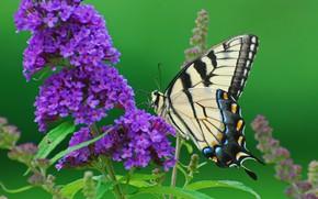 Картинка цветок, фото, бабочка