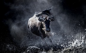Картинка природа, Африка, антилопа
