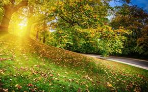 Картинка осень, лес, листья, деревья, парк, colorful, forest, landscape, park, autumn, leaves, tree, fall