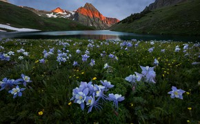 Картинка лето, цветы, горы, луг, водоем, водосбор, аквилегия