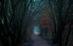 Картинка лес, деревья, природа, тропа, Шотландия, Великобритания, Леннокстаун