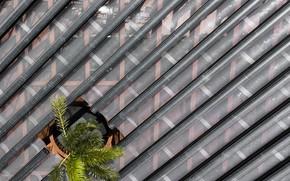 Картинка крыша, пальма, архитектура, отверстие, West Kowloon Pavilion - Hong Kong